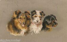 Drei putzige Hunde Künstler-AK 1906 Dogs Chiens Honden 1601011