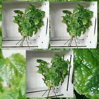 3 x  naturgetreu Minze Küchendeko Kunstpflanze Kunststoff Deko Dekoration Küche