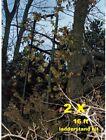 2X 16ft LADDERFLAUGE ladder tree stand camo kit hunting deer camouflage system