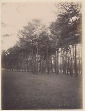 France, Bois de Vincennes  Vintage albumen print.  Tirage albuminé  17x2
