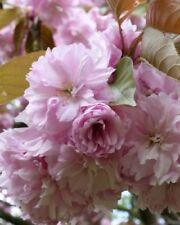 Pink Art Photographs