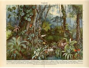 1920s TROPICAL FOREST JUNGLE PALMS LIANA ORCHID FLOWERS Antique Print