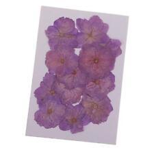 12pcs Fleur Pressée Séchées Fleurs de Cerisier Naturelles Artisanale