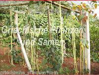 🔥 Meter-Bohne 15 Samen yardlong 3 feet plus 1 Meter lange Bohnen fadenlos