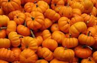 Pumpkin Seeds 100 Seeds Jack Be Little
