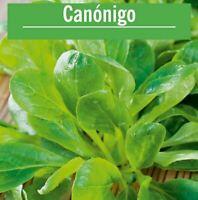 Semillas Canonigos 3.000 aprox seeds graines ensalada plantas comestibles