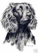 Boykin Spaniel Dog Drawing Art 11 x 14 Large by Artist Djr