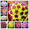24 Color Hoya Flowers Rare Perennial Bonsai Plants Pot Home Garden 100 PCS Seeds