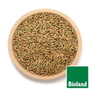 25 Kg Bio Roggen Bioland Roggen 100% Bio Brotgetreide !!! Sofort verfügbar !!!