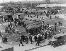 Photo. 1920s. Boston, MA. Sky View Circus Grounds - Elephants