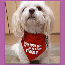 FUNNY DOG BANDANA. Adult humour (cute twat). Size Small to fit Shih tzu size dog