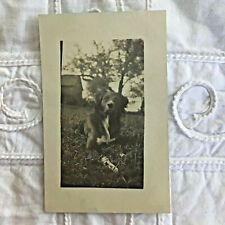 1900 Rppc Real Photo Country Dog Postcard Border Collie Keeper of the Farm 103