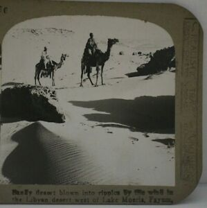 Antique Stereoview, Realistic Travels, Mounted Camels, Libyan Desert, Fayum