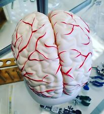 HUMAN BRAIN MODEL with ARTERIES ANATOMICAL ANATOMY MODEL (8-Parts with Stand)