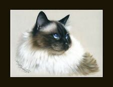 Ragdoll Cat My Darling Print by I Garmashova