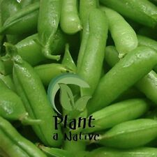 Pea Temperate Climate Vegetable Plant Seeds