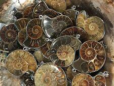 "Ammonite Pendant Silver wrapped, Madagascar, avg size 1 1/2"", you get 1 sku#792"