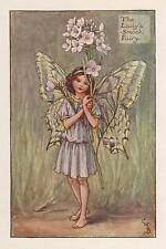 The Lady's-Smock Flower Fairy Original Vintage Print by Cicely Mary Barker