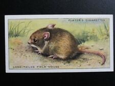 No.28 LONG TAILED FIELD MOUSE Animals of the Countryside - John Player 1939