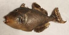 Huge Trigger Fish taxidermy fish mount Rare Approx 18 1/2� To 20� Long!