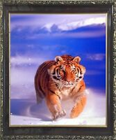 Siberian Tiger in Snow Wildlife Animal Mahogany Black Wall Decor Framed Picture
