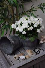Markenlose Blumentöpfe aus Zink