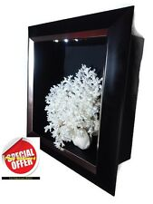 Price Down !Natural White Marine Coral display into a black frame w/ Led Light