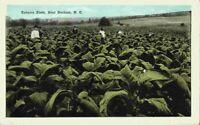 Farmers Picking Tobacco in Field Near Durham North Carolina NC 1920's Postcard