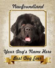 "Newfoundland Dog Personalized Art Home Decor 8""x10"" Photo See Video"