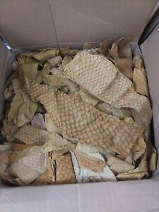 20 Veg tan Tilapia Fish Leather hide Skin Tan Suede Finish sewing jewelry 2oz