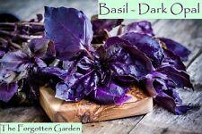 Basil Dark Opal Seed 100 Seeds Herb Heirloom Medicinal Garden Purple Sweet