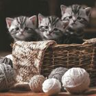 4 Servietten ~ Striped Kittens Katzen Kätzchen gestreift im Wollkorb basteln