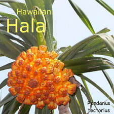 Hawaiian Hala Stilt Root Screw Pine Pandanus tectorius Live Plant Seedling Zone9