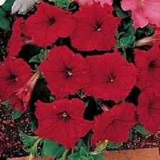 50 Pelleted Petunia Seeds Celebrity Red FLOWER SEEDS
