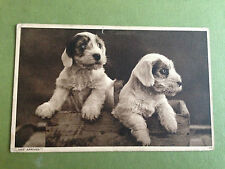 Photochrom Co Ltd Dog Collectable Animal Postcards