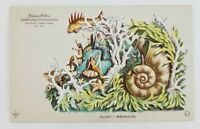 Postcard Hudson Fulton Celebration Mermaid Fish Float 1909 Newburgh New York