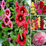 100Pc Hot Hollyhock Summer Carnival Mixed Chaters Flower Seeds For Garden Decor