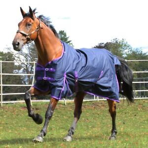 Gallop Trojan Horse Turnout Rug 0G Fill LightWeight Standard Neck in Navy/Purple