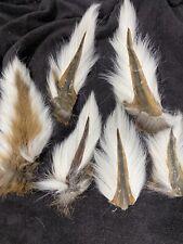 Jumbo White Tail Deer Tails