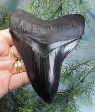 SUPER SERRATED 4 13/16'' MEGALODON TOOTH REPLICA/FOSSIL SHARKS TOOTH TEETH