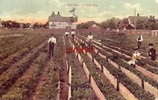 workers in the field CELERY FARM. SANFORD, FL 1908
