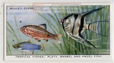Platy Barbell and Angel Fish Communinty Tank Freshwater Vintage Trade Ad Card