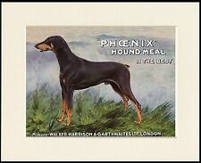 DOBERMAN PINSCHER GREAT DOG FOOD ADVERT PRINT MOUNTED READY TO FRAME
