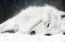 Framed Print - White Dire Wolf Sleeping in the Snow (Picture Poster Art Animal)