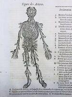 Angiologie 1614 Veine Artère Médecine Ambroise Paré Chirurgie Trachée Artère