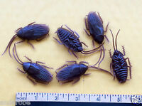 Six (6) Rubberized COCKROACHES Insects Nice UNIQUE, RARE & REALISTIC Lot! L@@K!