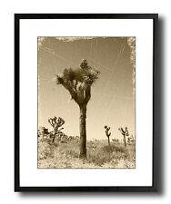 Joshua Tree Sepia Vintage 17x21 Framed Fine Art Print, Black Elegant Slim Frame