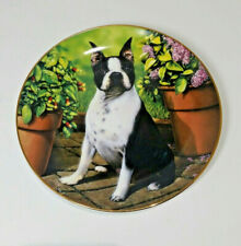 """Boston Terriers Collector Plate """"All Ears� by Dan Hatala"""