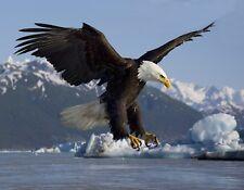 METAL REFRIGERATOR MAGNET Bald Eagle Alsek River Alaska Travel Ice Bird Birds