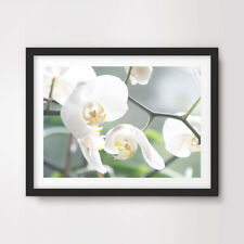 White Orchid FLOWERS FLORAL PHOTOGRAPHY ART PRINT Poster Decor Wall Picture